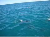凯库拉与海豹同游