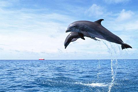 与海豚共游