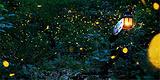 黄金海岸之夜色萤火虫
