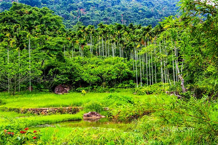 雨林生活体验两日游