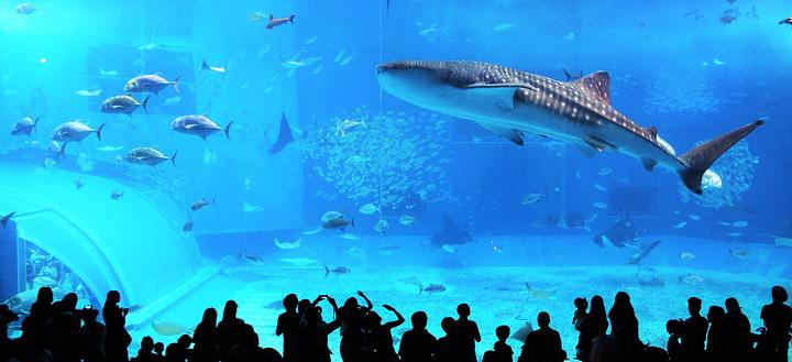 美之海水族馆旅游图片