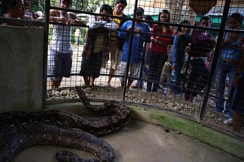 Python Sanctum