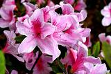 全年无休鲜花节