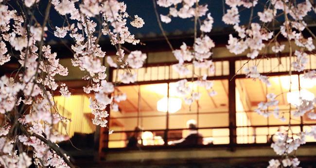 春の樱花季,踏遍关西235000步!