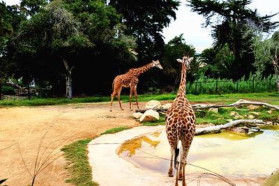 小小动物园