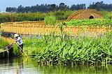 五甲塘湿地公园