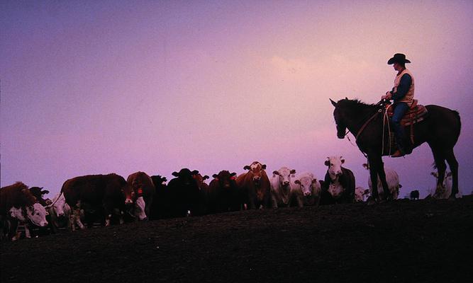 德州牛仔生活旅游图片