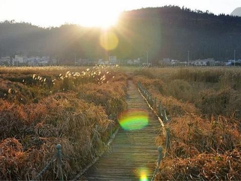 西华湿地旅游景点图片