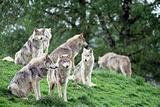 野狼湖生态旅游风景区