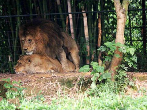 Parc omega野生动物园旅游景点图片