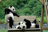 亚布力动物园