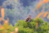 八卦山赏鹰