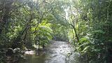 呼吸热带雨林的空气