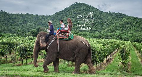骑大象游览