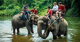 有关大象的一切