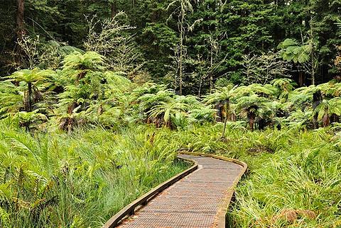 卡雷瓦雷瓦州立森林公园