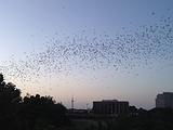 观察蝙蝠的生活