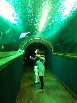 塞维利亚海洋馆