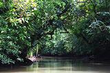 野生红树林
