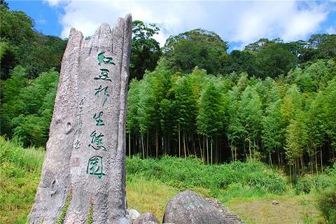 红豆杉生态园
