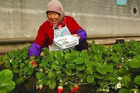 青岛法海寺生态农业观光园