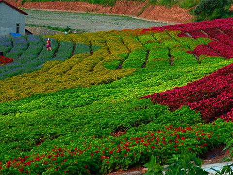中国香山寿香谷旅游景点图片