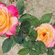 伊甸园玫瑰观光景区
