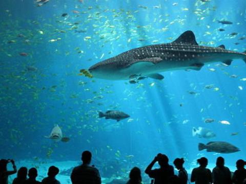 塞维利亚水族馆旅游景点图片