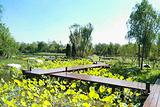 武清南湖绿博园