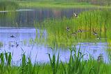 北京汉石桥湿地公园