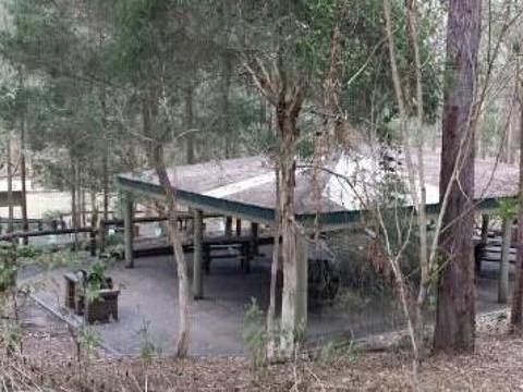 菊花山考拉保护中心旅游景点图片