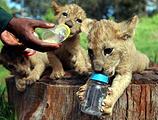 动物孤儿院