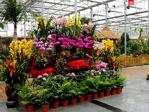 花卉园艺展示馆旅游景点图片