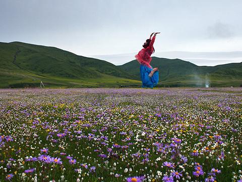 红原花海旅游景点图片