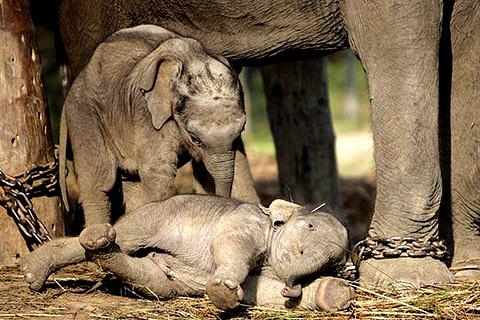 大象繁育中心