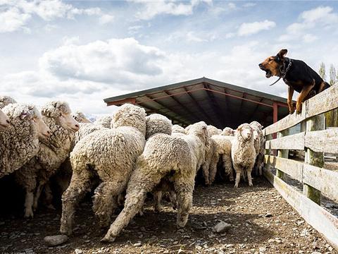 尼古拉斯山牧场旅游景点图片