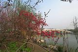 淄博市植物园