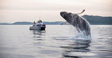 温哥华观鲸之旅