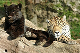 萨尔茨堡动物园