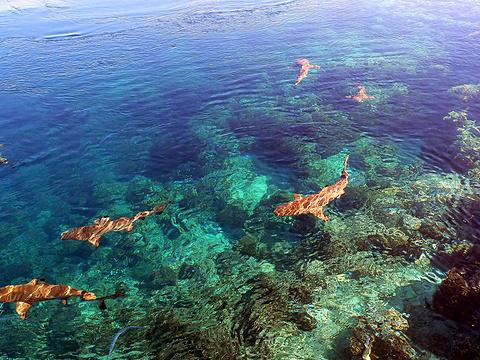 法卡若瓦岛旅游景点图片
