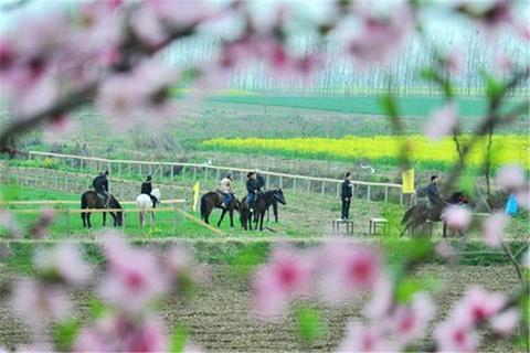仙桃旅游图片