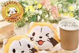 小浣熊拉斯卡尔咖啡厅