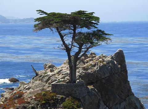 圆石滩旅游图片