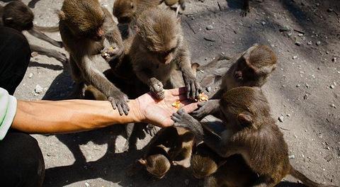 猴岛的图片