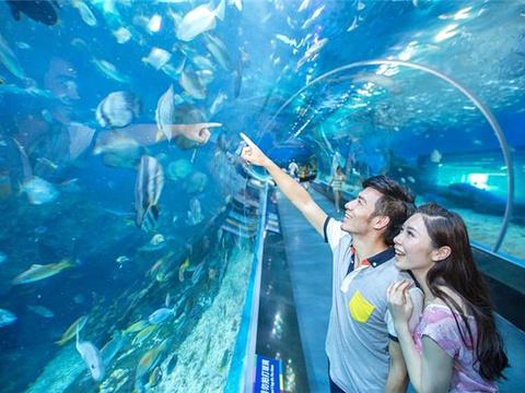 石家庄海洋公园旅游景点图片