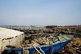 任家台渔港