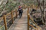 汉拿山步道