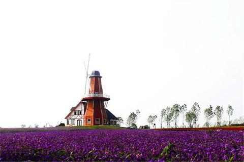 哈尔滨普罗旺斯薰衣草庄园