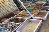 长岛海鲜市场