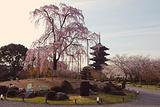 京都樱花和服店
